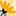 Heilpflanzenschule Logo